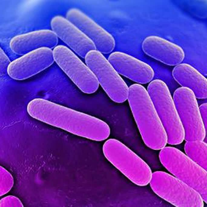 Klebsiella Penumoniae Infection